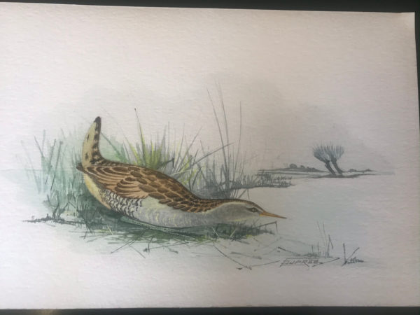 Watercolour of Water Rail Wading Bird – Sold